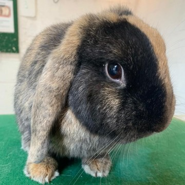 Adopt the Rabbits