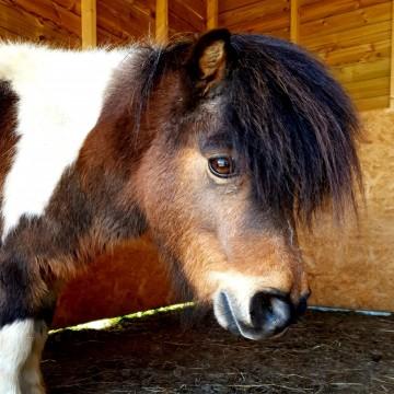 Adopt a Pony